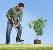 Дела посадить дерево посадить дерево